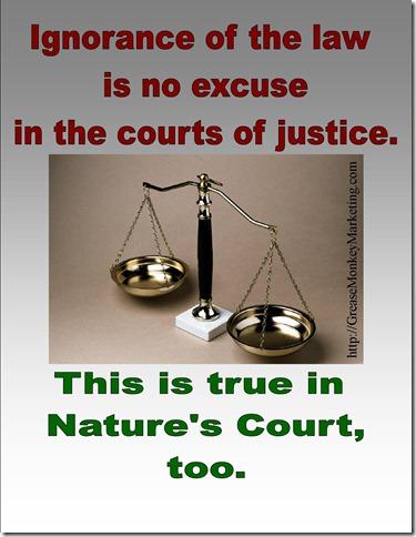 Nature's Court